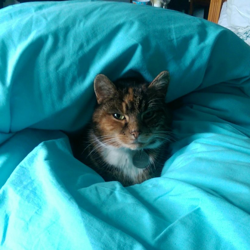 Not Going Out