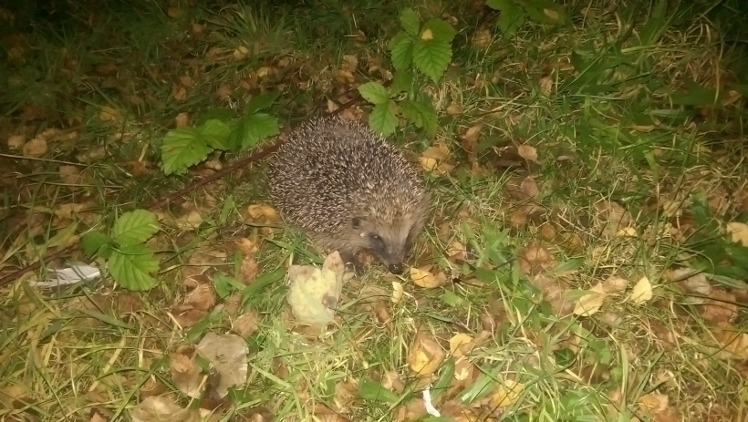 Nocturnal Visitor