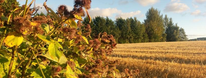 Harvest Evening