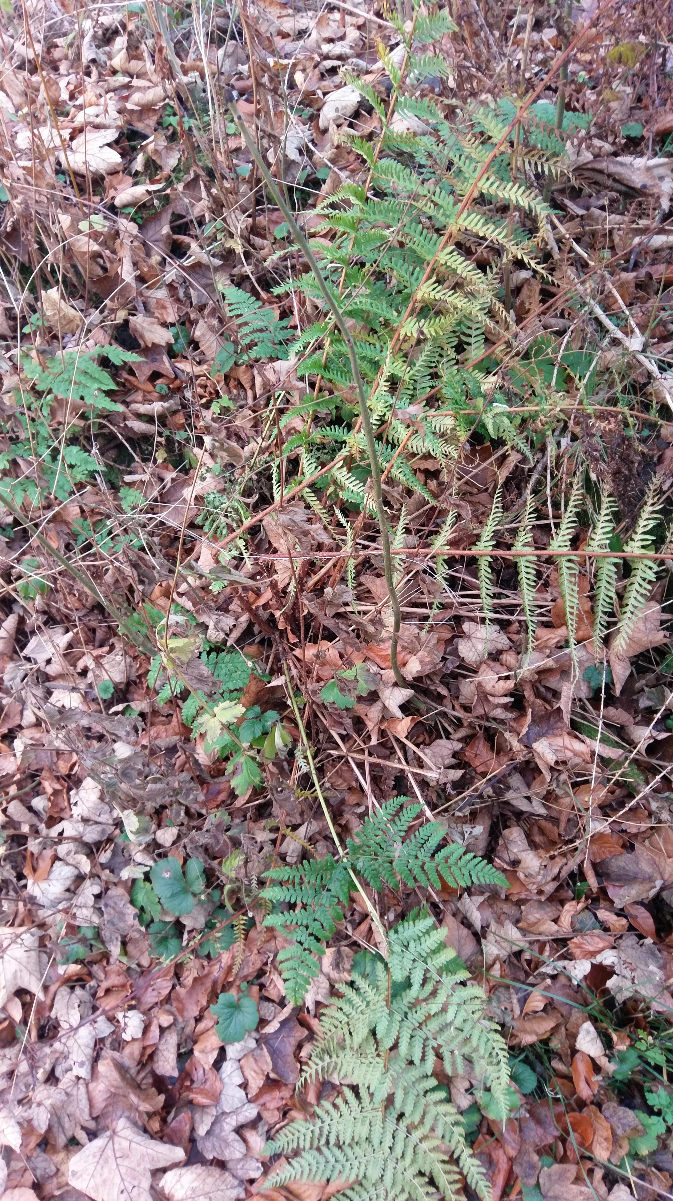 Autumn Undergrowth