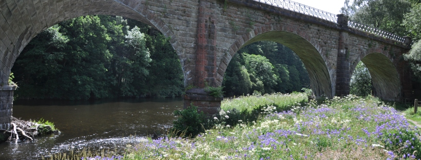 Wild flowers on the banks of the River Tweed