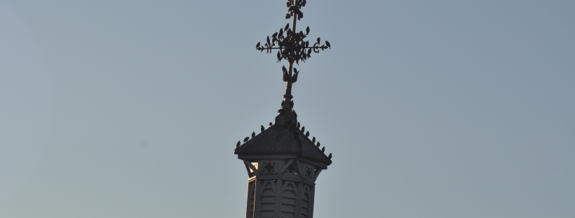 Birds Gathering on the rooftop and spire