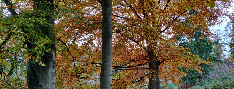 Trees with their autumn reds and browns