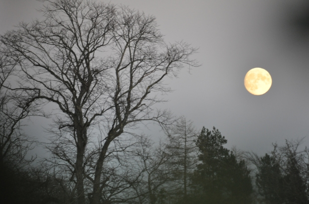 Almost Full Moon On A Late Autumn, Misty Evening