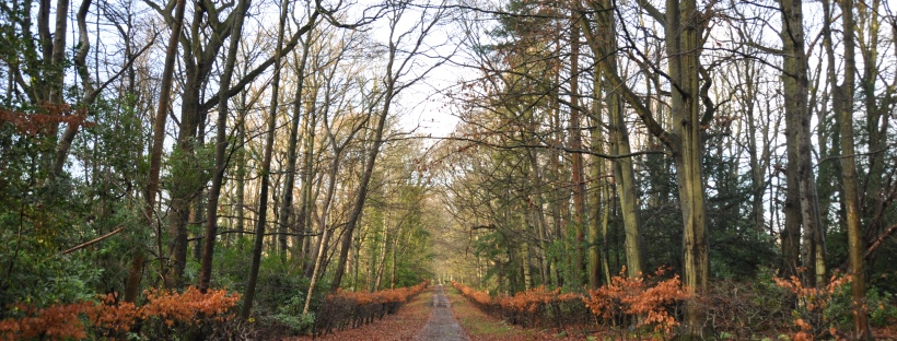 Fallen leaves along a tree-lined road in late autumn