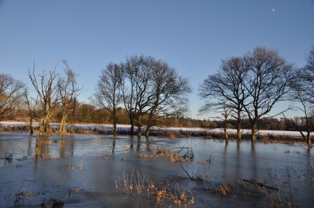 Trees standing in frozen water
