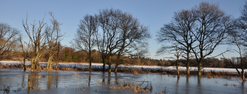 Trees standing in frozen water